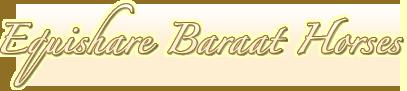 Equishare Baraat Horses | Equishare USA, LLC.